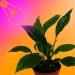 Эффективная светодиодная LED подсветка растения (Видео)